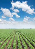 Agriculture — Foto Stock