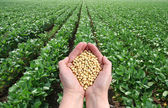 Agricola concetto — Foto Stock