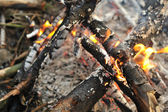 Burnt wood closeup — Stock Photo