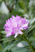 Purple flower — Stockfoto