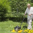 Mid age man is mowing the grass — Stok fotoğraf