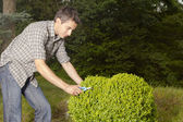 Man cutting and trimming box tree heart — Stock Photo