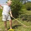 Mid age man raking the garden — Stock Photo