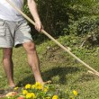 Stock Photo: Raking the garden - closeup