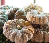 Pumpkin at retail shop — Stock Photo