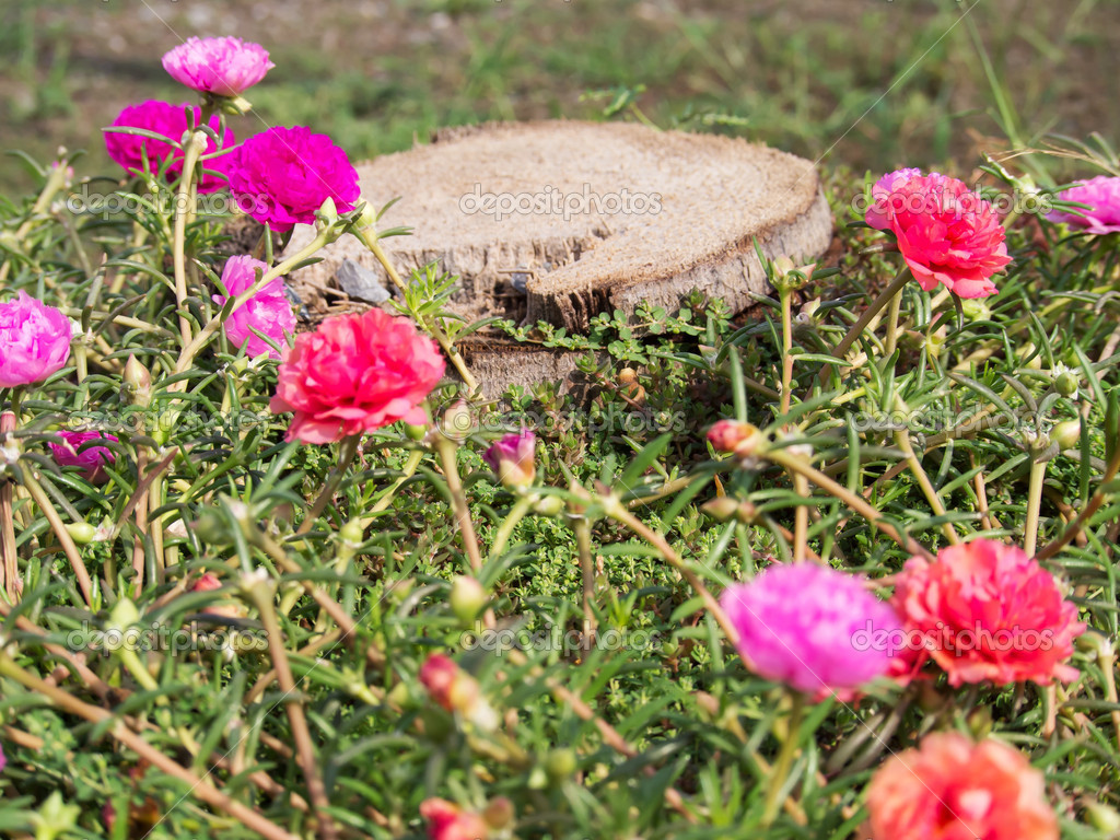 Colorful flowers with tree stump  Stock Photo #10856766