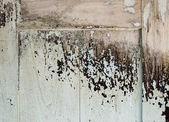 Texture of old weathered wooden — Stock Photo