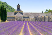 Abdij van senanque bloeiende lavendel bloemen. gordes, luberon, pr — Stockfoto