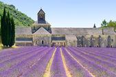 Abtei von senanque blühenden lavendel blumen. gordes, luberon, pr — Stockfoto