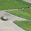 Vineyards rows, rural hut aerial view. Provence, France — Stock Photo