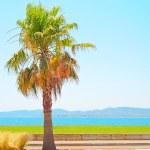 Saint Raphael beach, sea bay and palm. Azure Coast, Provence. — Stock Photo