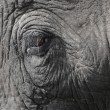 Closeup of the eye of an elephant — Stock Photo