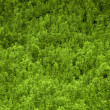 Bright green forest treetops — Stock Photo