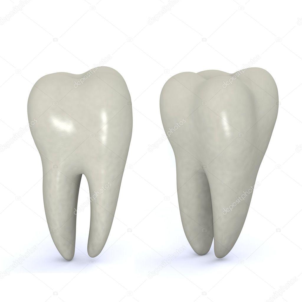 Коренной зуб ребенка фото