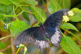 Экзотические бабочки в естественной среде обитания — Стоковое фото