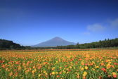 Mt.Fuji and Cosmos — Stock Photo
