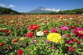 Mt.Fuji and Zinnia — Stock Photo