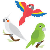 Set of cartoon parrots — Stock Vector