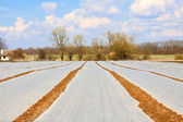 Field covered with polyethylene slick — Stock Photo