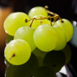 Brush grapes — Stock Photo