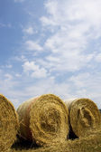 Hay field — Photo