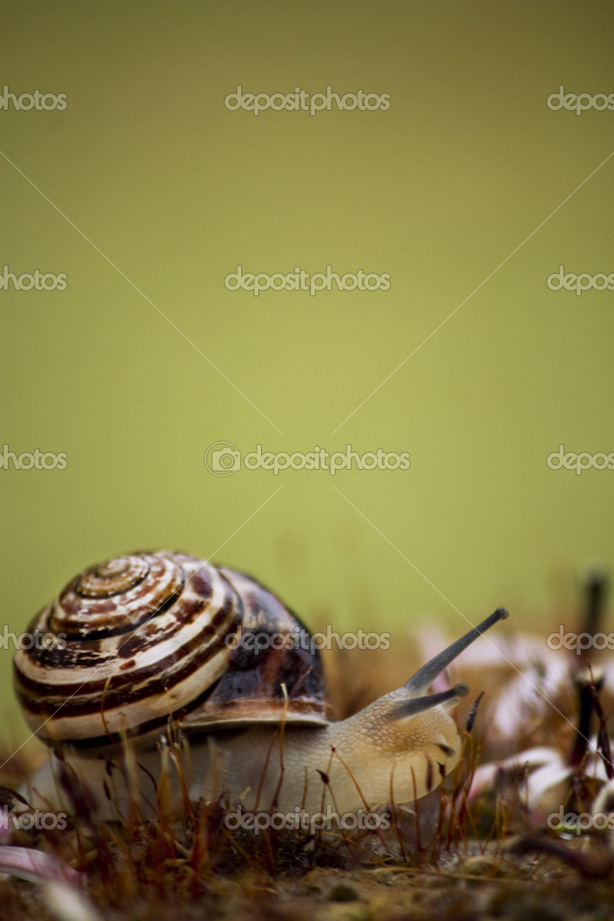 Snail in the grass — Stock Photo #11062498