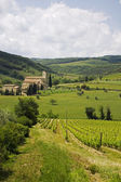 Vineyards in Tuscany with Abbey's — Stock Photo