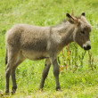 Royalty-Free Stock Photo: Little donkey