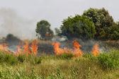 Burn fields — Stock Photo