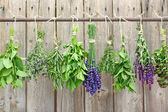 Various herbs — Stock Photo