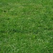 Stock Photo: Grass grows in park