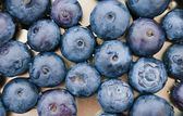 Fresh blueberries closeup . texture bluenerry. selective focus — Stock Photo