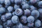 Fresh blueberries closeup .texture bluenerry.selective focus — Stock Photo
