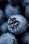 Fresh blueberries closeup .texture bluenerry, selective focus — Stock Photo
