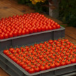 Tomatoes — Stock Photo #11224244