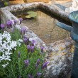 Garden with little fontaine and pond — Stock Photo #11224779