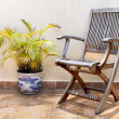 Wooden chair and palm tree in pot - Stock Photo