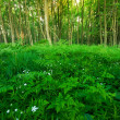 Green ferny forest - 