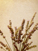 Flowers of lavender old paper — Stock Photo