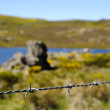 Wire with spring landscape behind — Stock Photo