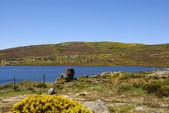 Lake in Spring — Stockfoto