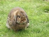Rabbit in garden — Stock Photo