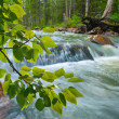 River in wood — Stock Photo #10996617