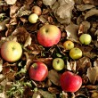 Apples on dry leaves — Foto Stock #11599982