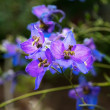 Blue flowers — Stockfoto #11341466