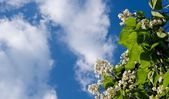 Powietrza latem — Zdjęcie stockowe