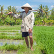 Royalty-Free Stock Photo: Old rice farmer
