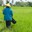 Farmer in paddy field — Stock Photo #10962157