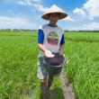 Rice farmer in Bali - Stock Photo