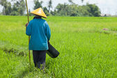 Farmer in paddy field — Stock Photo